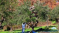 Men up in the tree.jpg