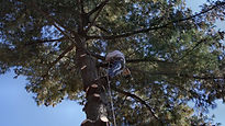 Man on a tree.jpg