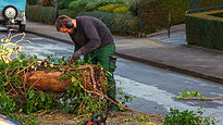 Man cutting up a tree.jpg