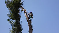 Man up the tree.jpg