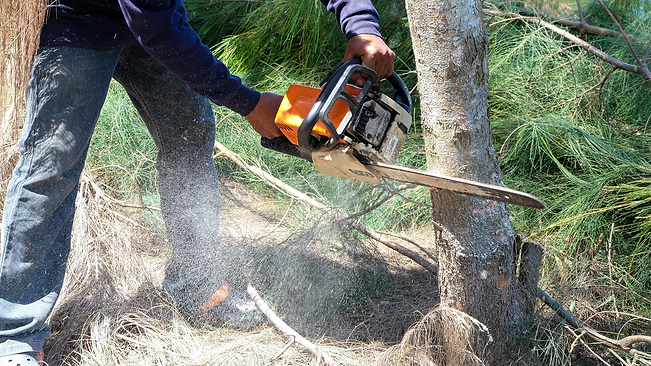 Man cutting up a tree.png