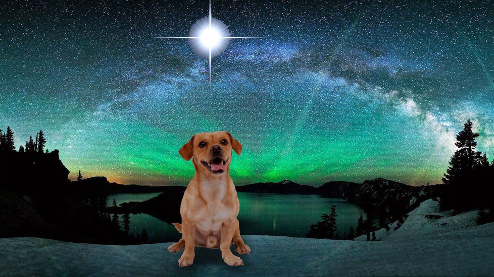 Ascension and Our Pets: How We Can Support Them