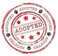 Adopted-Logo-small21.jpg