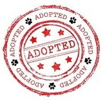 Adopted-Logo-small21.jpg