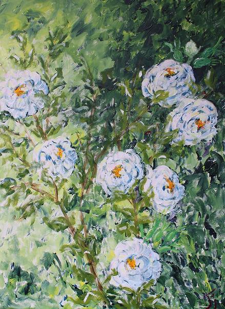 roser hvide.jpg