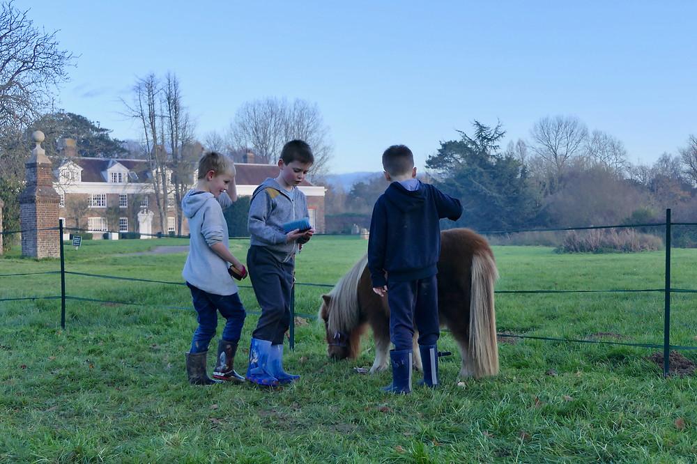 Pony Petting Fun