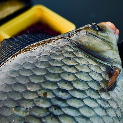 Skretting Fish Feeds February 2018