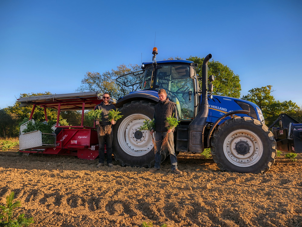 New Holland T5 tractor, Christmas tree planting