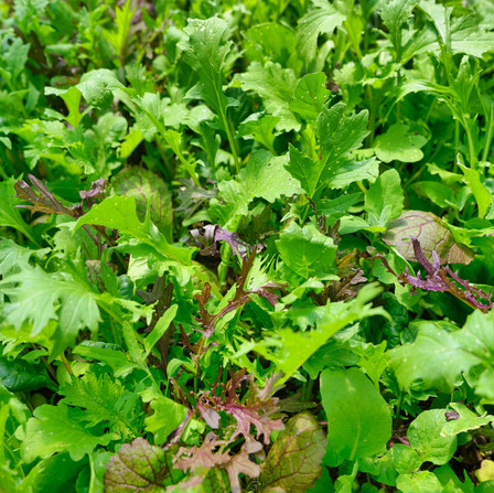 Spring/Summer - Growing Mixed Leaves