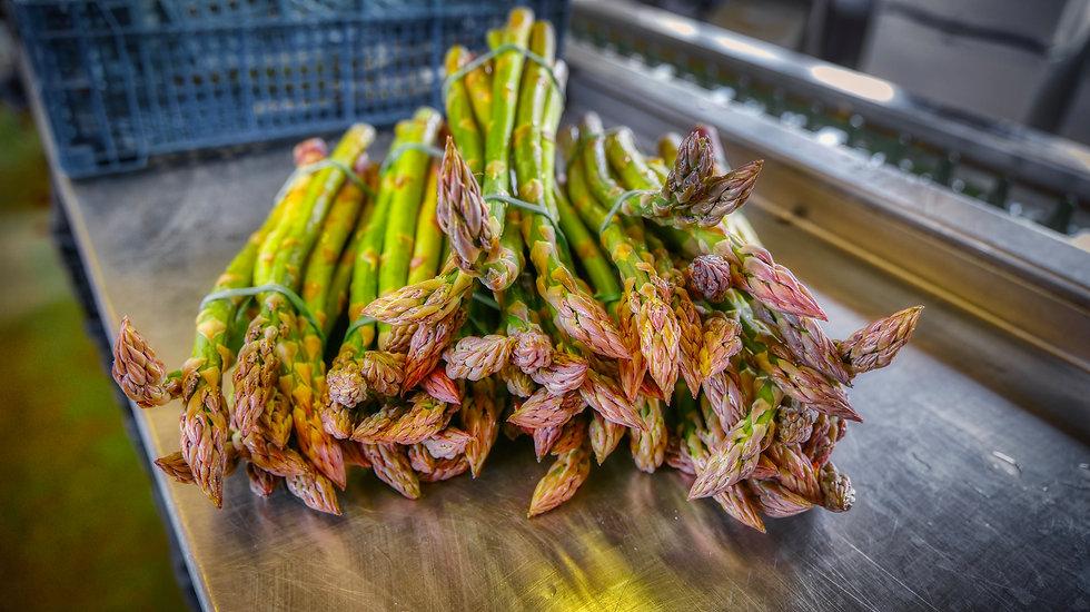 Freshly Cut Asparagus.jpeg