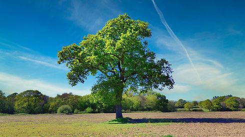 Oak Tree Logo Inspiration.jpeg