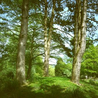 Trees post Surgery