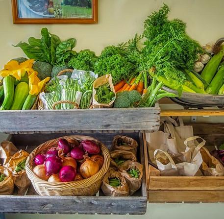 Summer - Fresh Summer Vegetables