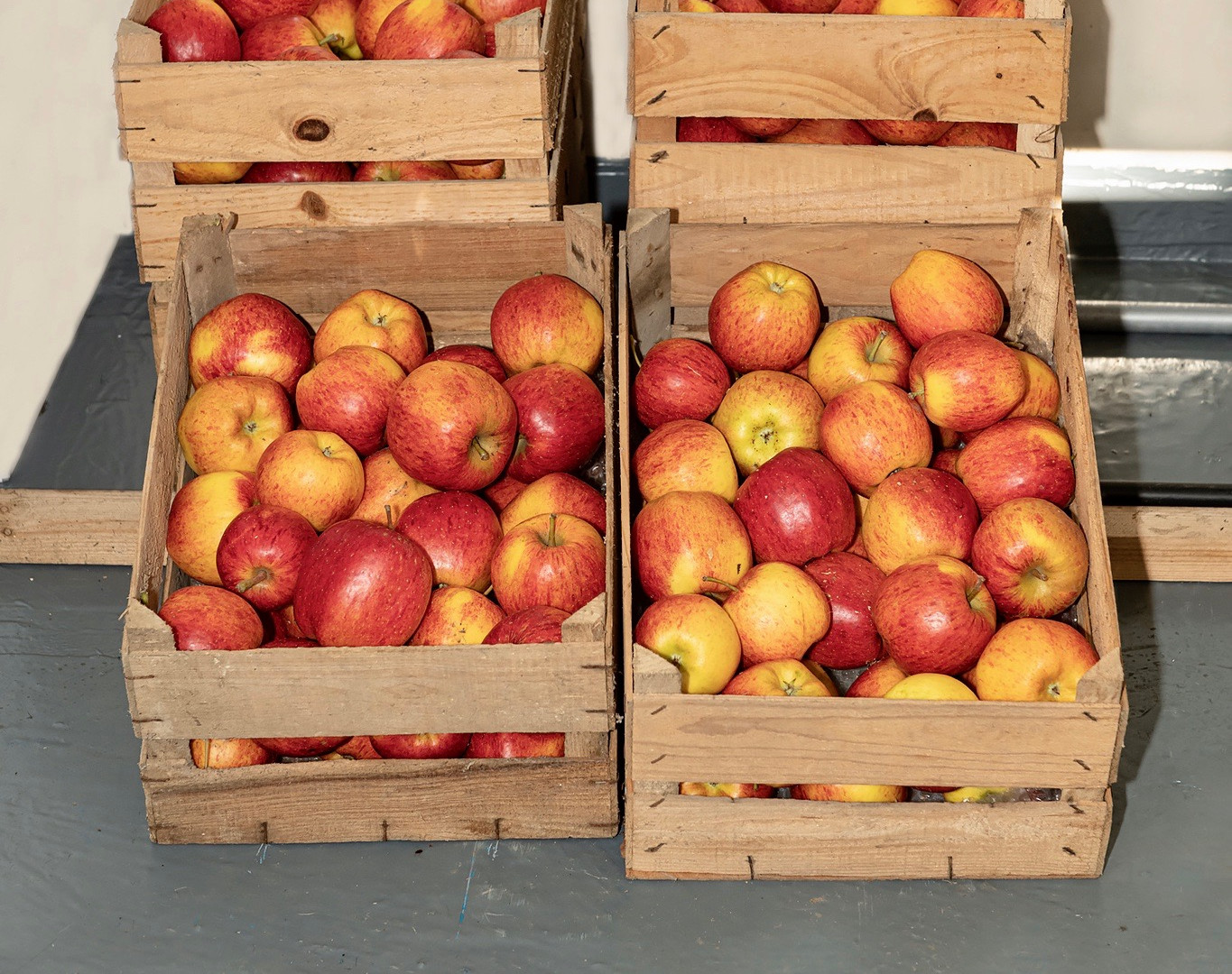 "Autumn - ""Smitten"" apples from Hartsheath Farm"