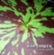 Nymphaea 'Nida' Tropical Waterlily บัวผั