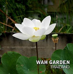 Super Bright Xiamen Lotus 7.jpg