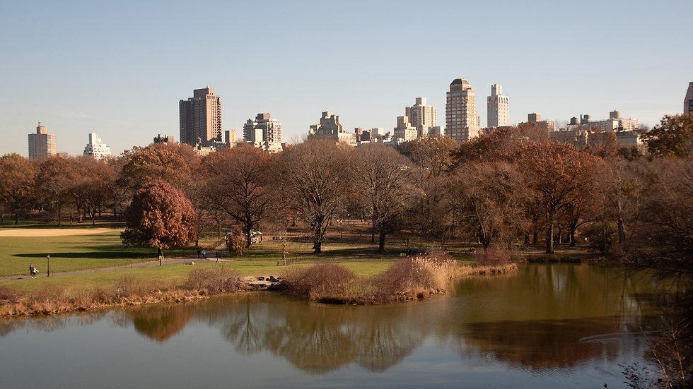 NY From Central Park