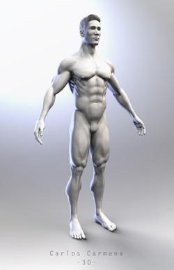 Hombre - Base anatómica