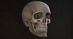 Cráneo, render.