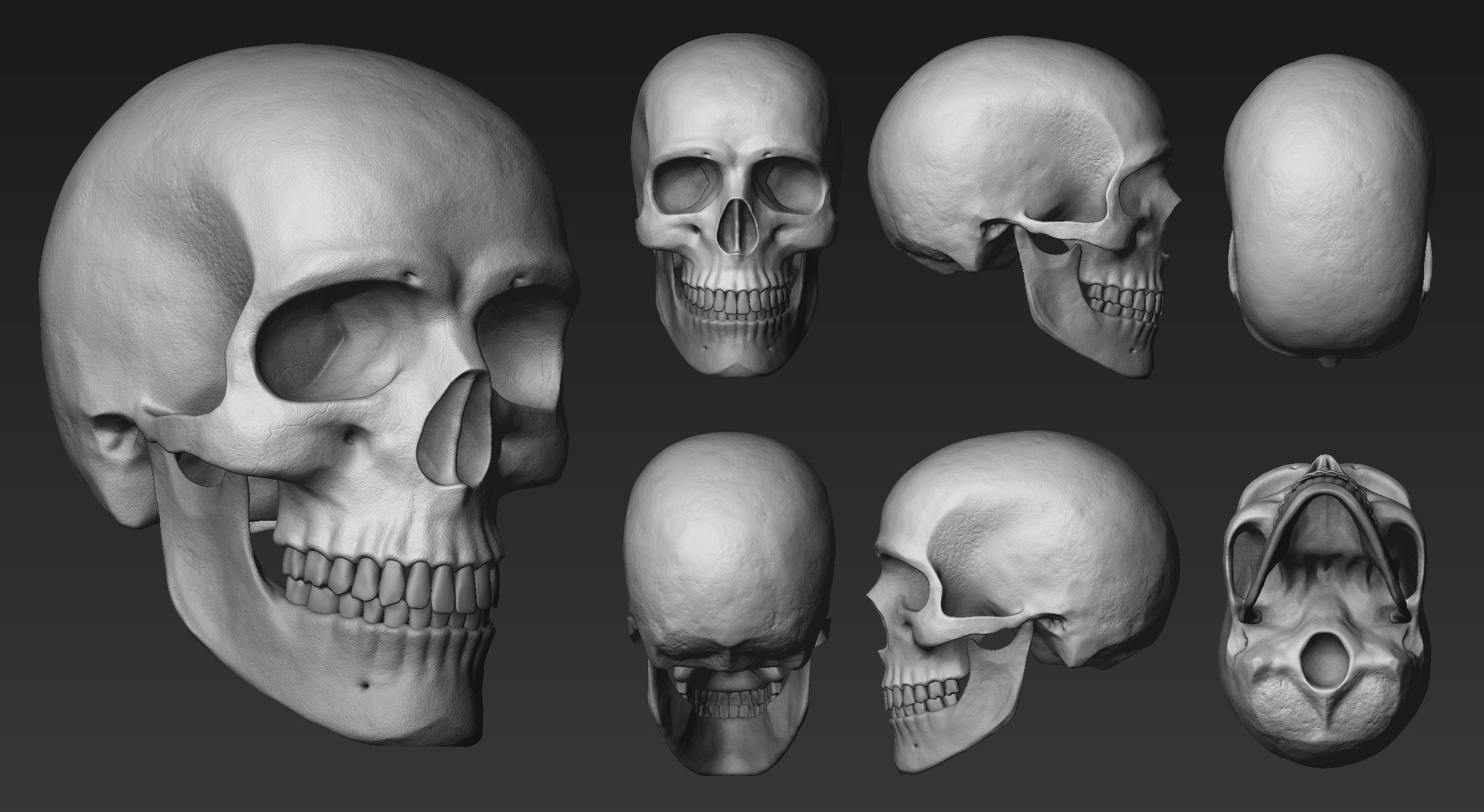 Cráneo, vistas.