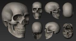 Cráneo, vistas color.