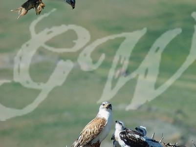 The Birds of Prey Duo