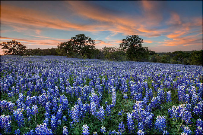Texas-Bluebonnets-in-San-Saba-County-Spr