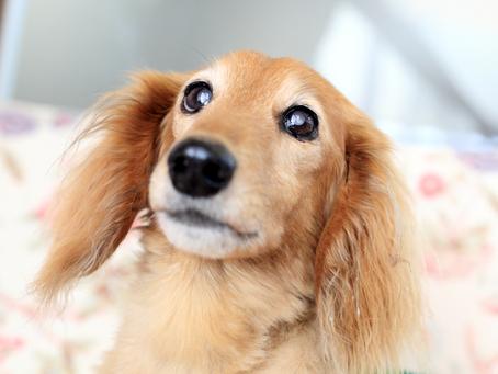 2月24日(月振休)14時シニア犬セミナー(残席わずか)