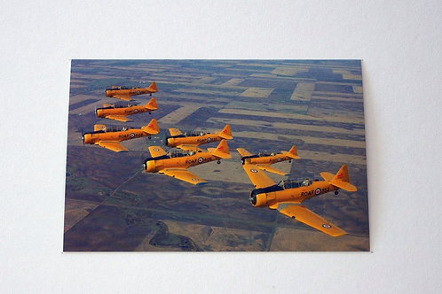 North American Harvard Goldielocks (25 postcards)