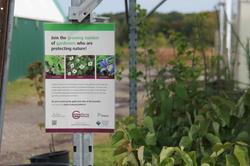 Guide to Non-Invasive Plants