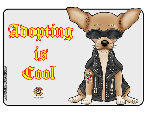 Adopting is Cool - Chihuahua