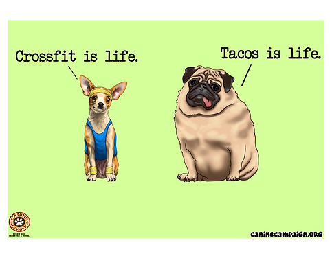 Crossfit & Tacos
