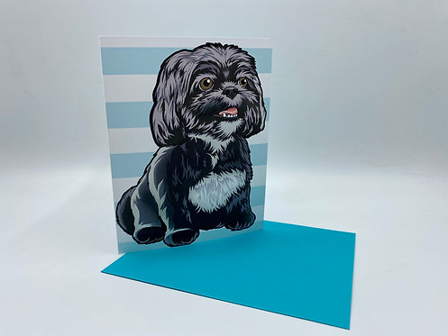 Black & White Shih Tzu