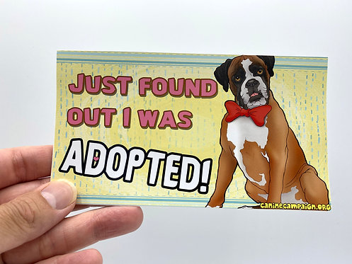 Adopted Boxer! (Bumper Sticker)