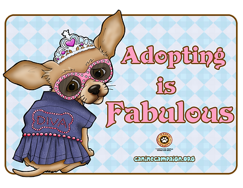 Adopting is Fabulous (Chihuahua)