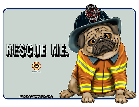 Rescue Me (Firefighter Pug)