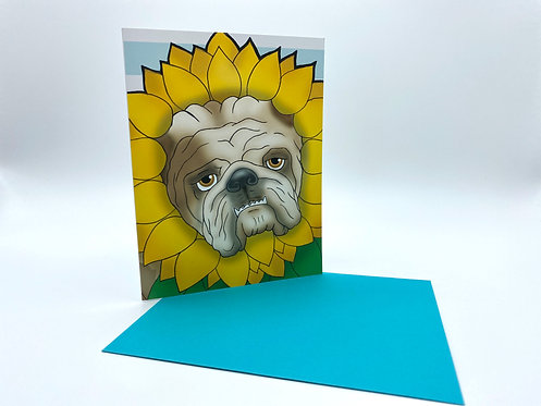 Sunflower Bulldog