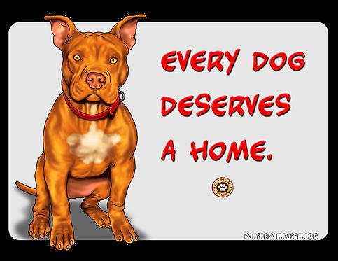 Home - Pitbull
