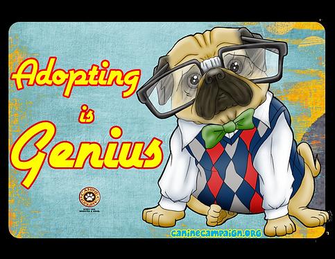 Adopting is Genius