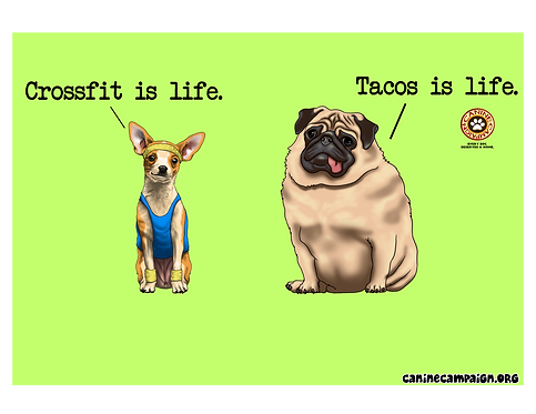 Tacos is Life