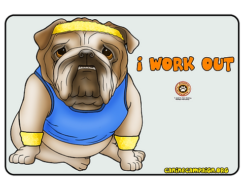 I Work Out - English Bulldog