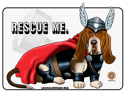 Basset Hound - Rescue Me (Thor)