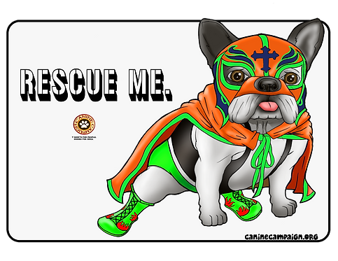 Rescue Me - Frenchie