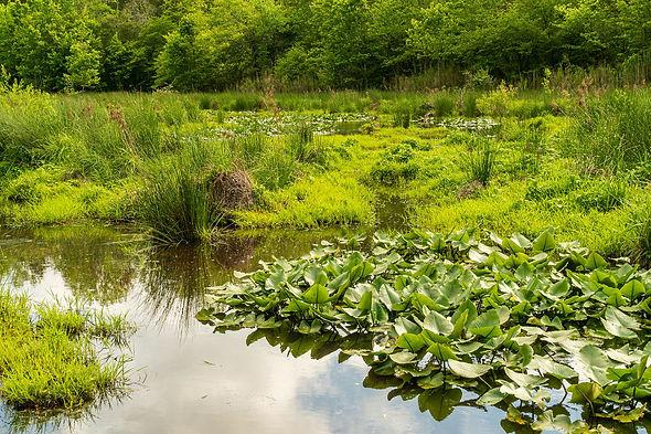 wetlands-5095846_1920.jpg