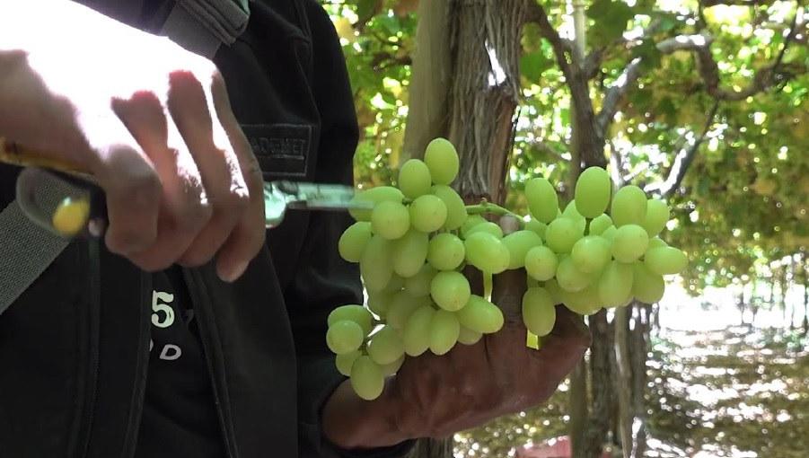 grapes 2.jpg