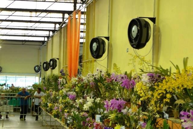 Orquidário em Limeira.jpg