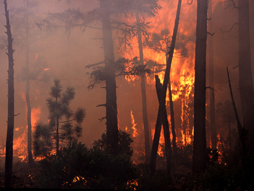 California Wildfires Have Now Burned More Than 4 Million Acres