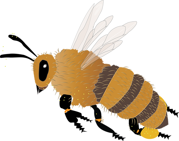 honey bee flying.png