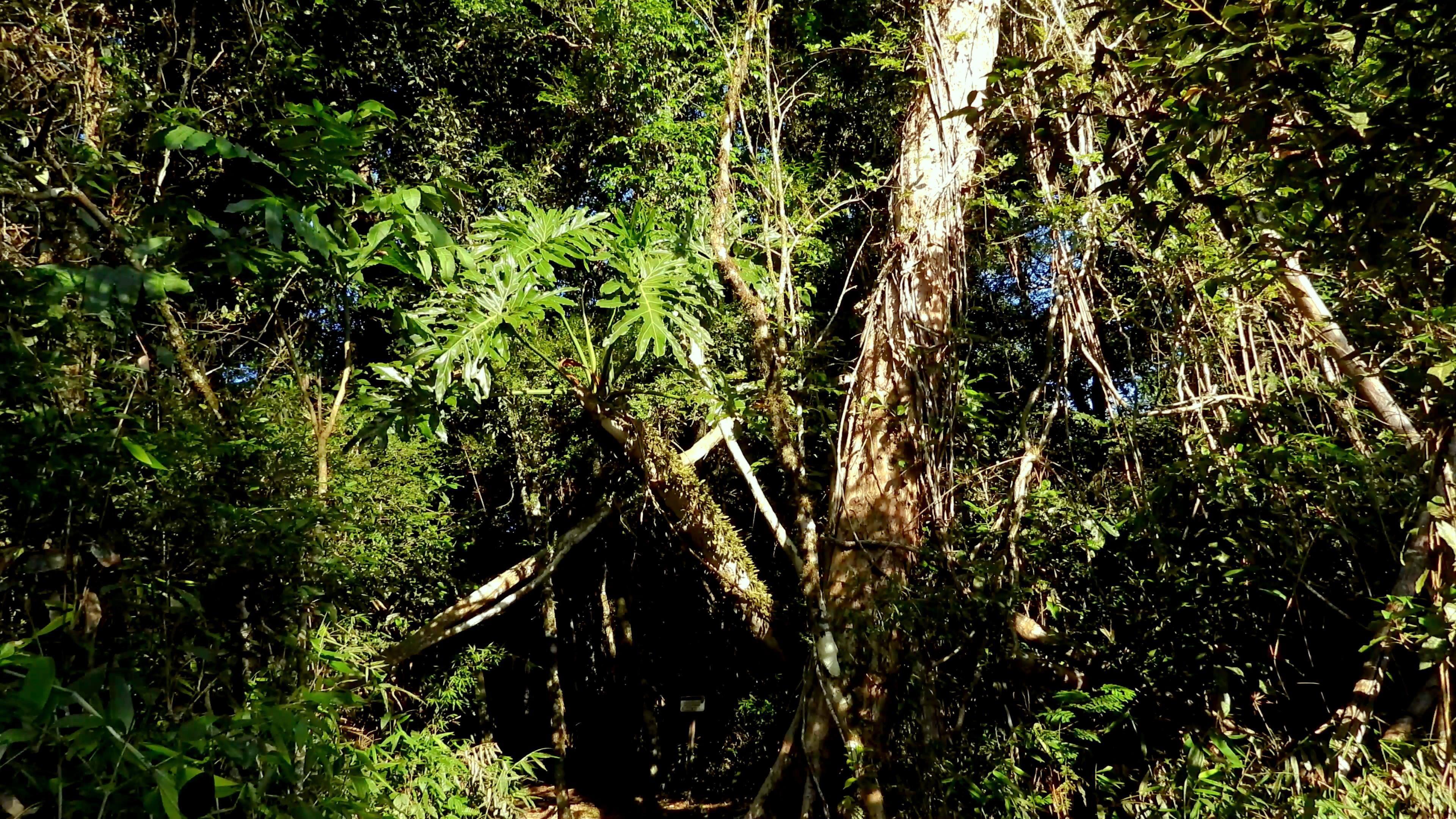 Reserva Natural del Bosque Mbaracayú
