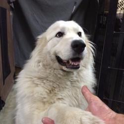 I'm Bear - nice to meet you!